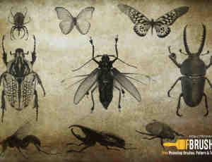 昆虫、蝴蝶Photoshop笔刷下载