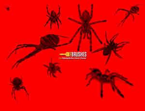 真实恐怖蜘蛛、狼蛛、黑寡妇蜘蛛Photoshop笔刷下载