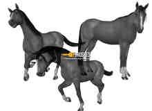 骏马、马匹PS笔刷素材