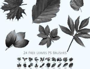 24种免费的树叶叶子、枫叶、梧桐叶PS笔刷素材下载