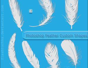 漂亮的羽毛造型PS自定义形状素材
