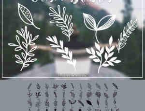 小清新手绘植物花纹图案PS笔刷素材下载