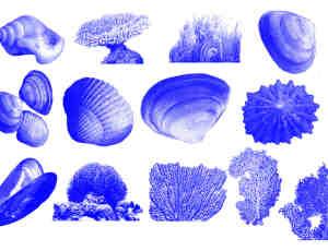 海螺、扇贝、贝壳、珊瑚绒等大海元素PS笔刷素材下载