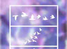 飞鸟图形、天空中鸟儿队列Photoshop笔刷