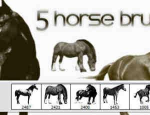 5匹真实的骏马、马匹图形PS笔刷