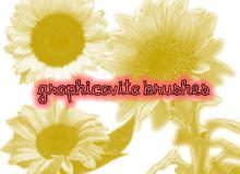 真实的向日葵花朵Photoshop笔刷素材下载