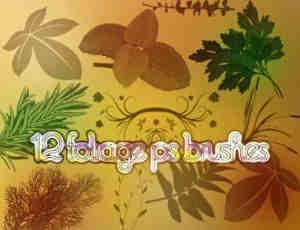 植物叶子、野草、杂草Photoshop笔刷素材下载