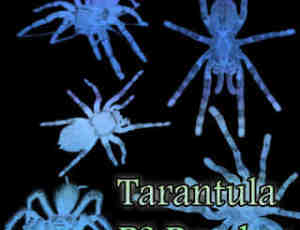 恐怖蜘蛛造型Photoshop昆虫笔刷