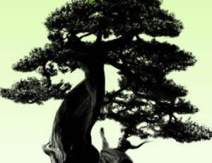 盆景松树效果Photoshop笔刷素材