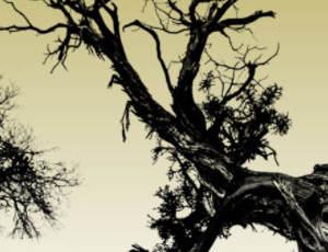 12种枯死的树木树枝造型Photoshop笔刷素材下载