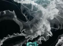 高清水母造型图案PS海洋生物笔刷