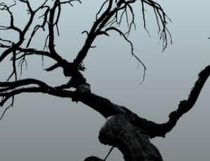 枯树树干、树枝造型PS笔刷素材