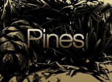 大树、树木、松树、松果剪影造型PS笔刷素材下载