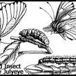 手绘昆虫、蝴蝶、毛毛虫、苍蝇图形PS笔刷素材下载