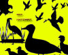 野鸭、飞鸟、大雁轮廓剪影图案PS笔刷素材