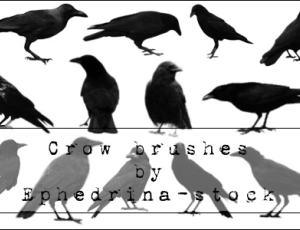 乌鸦造型PS鸟类笔刷