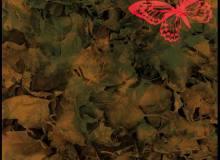 落叶堆、枯树叶堆纹理Photoshop背景笔刷素材下载