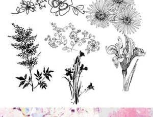 漂亮的手绘植物鲜花图案PS笔刷素材下载