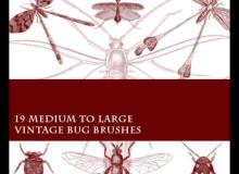 蚊子、蜻蜓、螳螂、臭虫、苍蝇等昆虫标本图案PS笔刷素材下载
