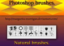 一组蜜蜂窝纹理、植物叶子、青草草丛图案、树荫等PS笔刷素材