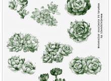 漂亮的水彩手绘花朵鲜花图案Photoshop笔刷素材下载