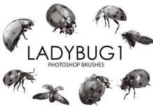 瓢虫、昆虫、甲虫PS笔刷素材下载