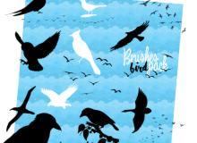飞鸟、鸟群剪影图形PS笔刷素材下载