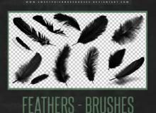 羽毛、真实的羽毛、鸟类羽毛Photoshop笔刷素材下载