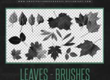 秋天的落叶、枯叶、枫叶、黄叶子、树叶Photoshop叶子笔刷素材下载