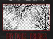 大树枝干、秋天的树荫、大树剪影图像Photoshop笔刷素材下载