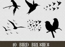 10种飞鸟、鸟剪影图像Photoshop小鸟笔刷素材