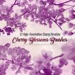 17种樱花节、樱花树浪漫樱花Photoshop花朵笔刷素材