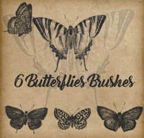 6种蝴蝶样本、蝴蝶标本图案Photoshop笔刷素材下载