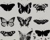 版刻式风格的蝴蝶、昆虫标本效果PS笔刷下载
