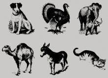 狗狗、大象、孔雀、骆驼、猫咪、驴子等动图造影图形PS笔刷下载