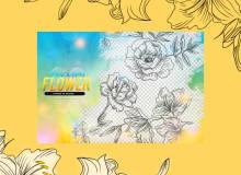 手绘线框鲜花图案、轮廓花朵PS笔刷素材下载