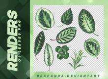 叶子、绿色的树叶造型之PNG图片免扣图透明格式笔刷素材