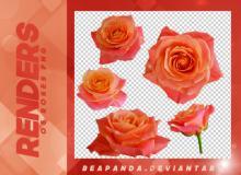 5种玫瑰鲜花花朵图案韩国笔刷风格下载(PNG免扣图透明格式)