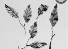树叶、叶子效果图案PS笔刷下载