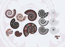 漂亮的鹦鹉螺花纹装饰图案Photoshop笔刷下载