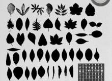 各种树叶、叶子的剪影图形Photoshop笔刷下载