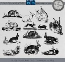 可爱兔子图像Photoshop笔刷下载