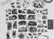 各种动物造型背景素材PS笔刷下载