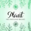 漂亮的手绘植物线条花纹图案Photoshop笔刷素材下载