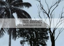 大树、树木造影、椰子树图形PS笔刷下载