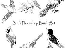 手绘鸟类图形Photoshop笔刷素材下载
