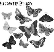 蝴蝶标本图案Photoshop笔刷下载