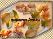 真实的树叶、叶子、秋天落叶、枯黄枫叶梧桐叶PS笔刷素材下载(PNG透明格式)