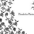 欧式经典的蕨类植物印花、花纹图案Photoshop笔刷下载