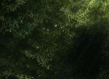 树叶效果PS笔刷素材下载